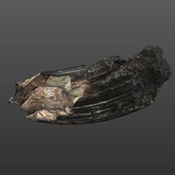 Image of Ontocetus emmonsi (USNM PAL 329064)