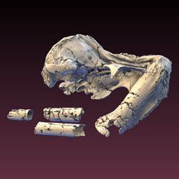 Image of Walrus Whale CT Scan